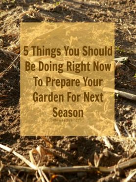 5 things you should be doing to prepare your garden for the next planting season ohsweetbasil.com
