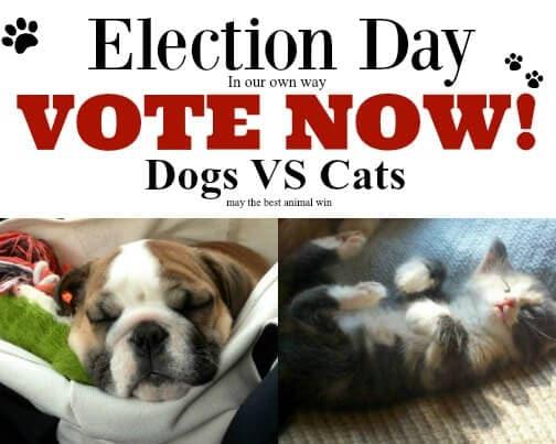 dog-vs-cats